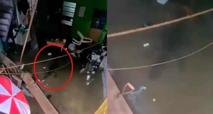 [Video] Familia encuentra a cocodrilo nadando en su sala luego de inundación