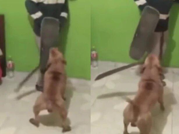 Video: El 'perrito machetero' que se roba el show en redes sociales