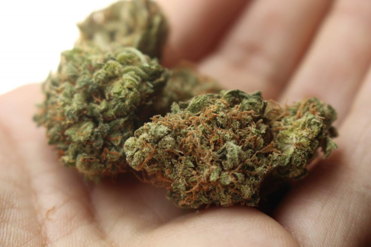 La marihuana reduce riesgo de contagiarte de COVID-19, según estudio