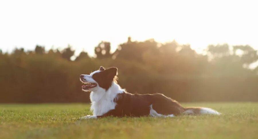 Multimillonario soltero murió y le dejó de herencia 5 millones de dólares… a su perra